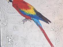 Thomas The Parrot